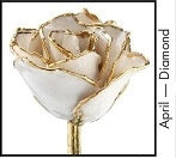 Picture of Lacquer Dipped Gold Trim Rose (April)